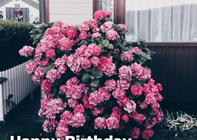 Beautiful and Amazing Birthday flower gifts for her - Happy Birthday Wishes, Memes, SMS & Greeting eCard Images