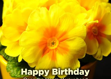 Top ten Birthday flower gifts for her - Happy Birthday Wishes, Memes, SMS & Greeting eCard Images