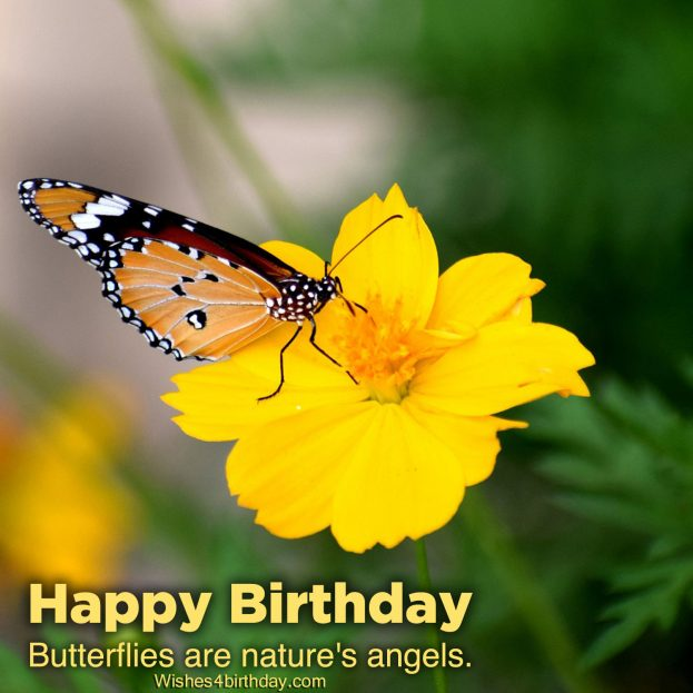 Cute Birthday quotes images 2021 - Happy Birthday Wishes, Memes, SMS & Greeting eCard Images